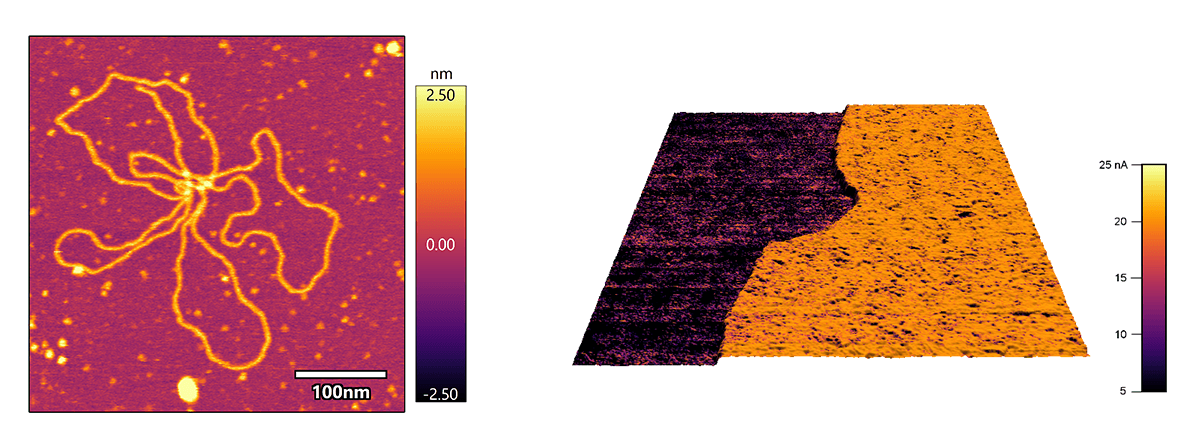 (Left) Topography image of DNA on mica imaged in buffer using liquid compatible probe holder, (Right) Electrical current image of indium tin oxide (ITO) covered glass with a discontinuous 60 nm thin layer of platinum (Pt) imaged using conductive AFM probe holder.