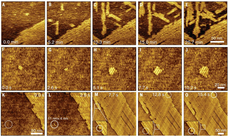 Topography images showing (top) peptides attaching to the surface from solution; (middle) nucleation and growth of an island; (bottom) formation of new rows beside older ones.