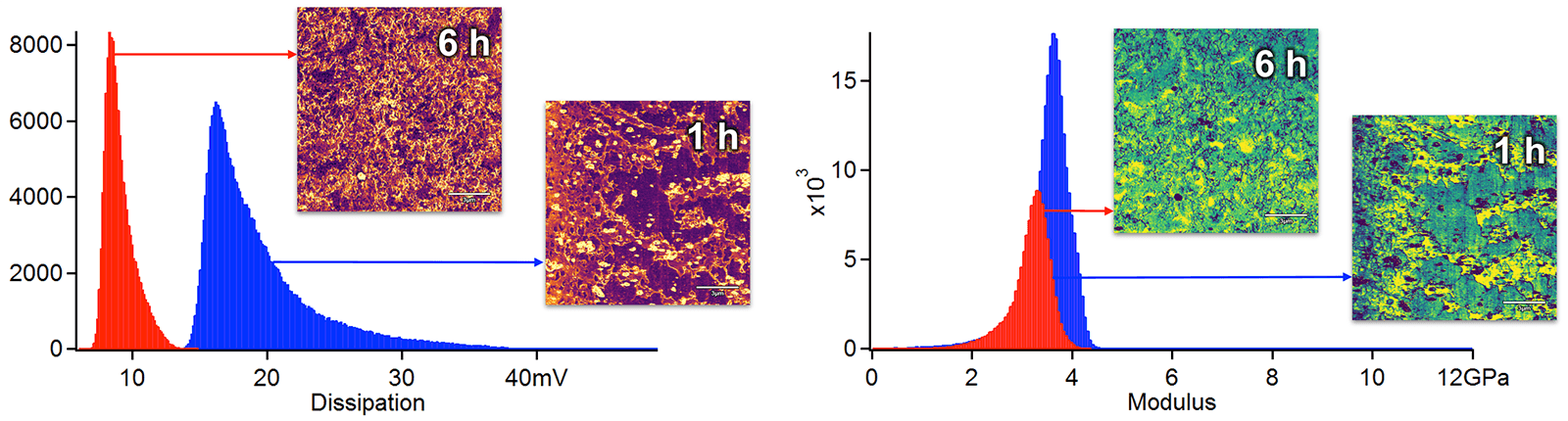 AFM measurements of dissipation and modulus on a tribofilm
