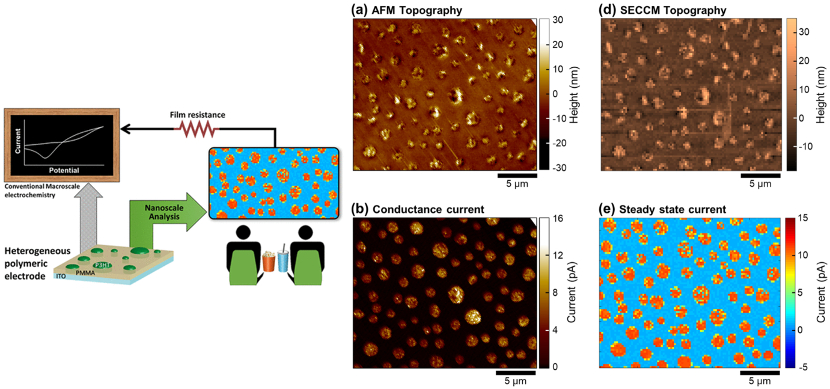 (left) Conceptual drawing of multiscale experiments. (right) AFM images of topography and current, and SECCM images of topography and steady state current on 1:5 P3HT:PMMA blend electrode.