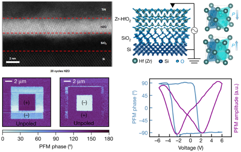 Cross-sectional ADF STEM image of ultrathin HZO film; schematics of Si/SiO2/HZO heterostructure and polarized HZO unit cells; PFM phase images; PFM phase and amplitude switching spectroscopy loops
