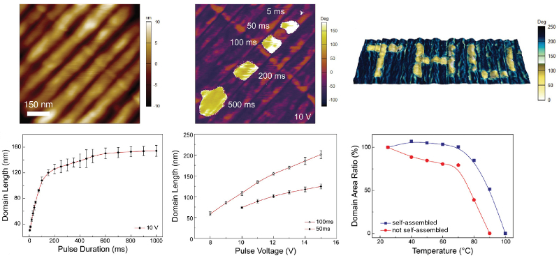 Topography and PFM phase images of copolymer film with reversal domains; PFM phase image of FeRAM application; graphs of domain length versus pulse duration and amplitude; plot of domain area versus temperature.