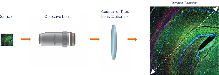 Schematic representation of how the sample area is captured and magnified onto the camera sensor