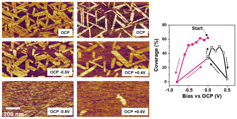AFM deflection images of the first adsorbed EDL layer for different applied bias voltages; graph of relative domain coverage as a function of applied bias as determined from the AFM images.