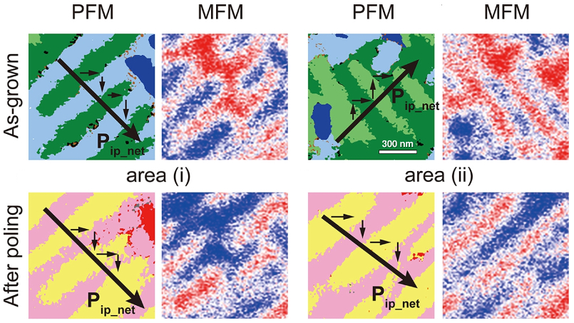 Images of total PFM response and MFM phase for two different locations on a BFCO film: (top) on the as-grown film and (bottom) after poling.