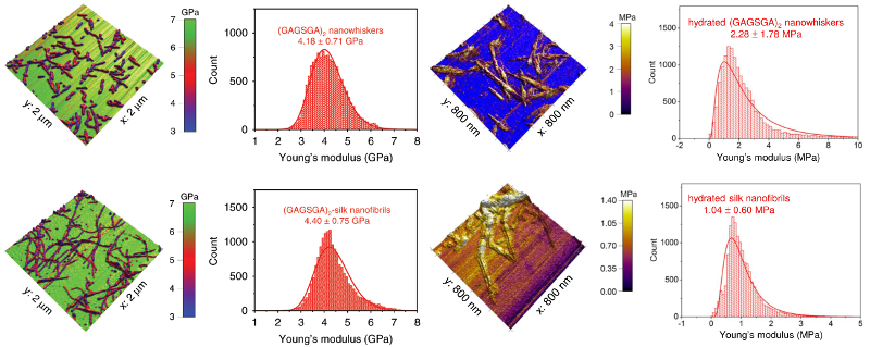 Maps of Young's modulus overlaid on topography and corresponding modulus histograms for (top) silk nanowhiskers and (bottom) silk nanofibrils acquired (left) in air and (right) in water.