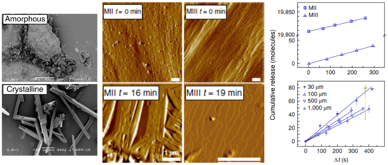 Scanning electron micrographs of amorphous and crystalline GW2580; time-resolved AFM images of MII and MII type crystals in PBS; cumulative release versus time for same-size MII and MIII crystals and for different sizes of MIII crystals.