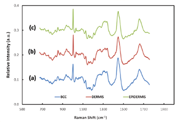 Typical Raman spectra acquired from BCC tissue, healthy tissue, dermis and epidermis
