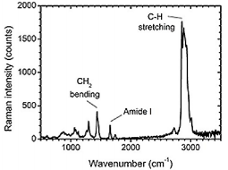 Raman spectrum of a single platelet-derived vesicle. The peaks reveal specific chemical bonds, which are present in this vesicle