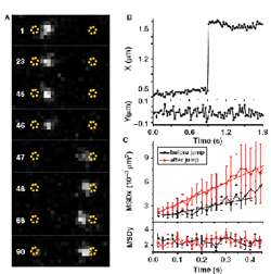 Single Molecule Detection