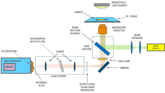 Schematic for a Raman setup with direct coupling of the spectrograph and microscope using a cage system