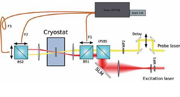 Schematic view of the experimental setup. The spatial light modulator (SLM) steers the excitation and beam, while the wave plates control the polarisation