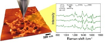 Figure 2: The TERS concept – a metallized tip is used to enhance the Raman response. An AFM image is shown to the left and sample Raman spectra taken from biofilm material is shown to the right. (Courtesy of Prof Zenobi's group, ETH, Zurich)