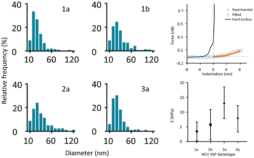 Histograms of VLP diameter obtained from topography images for four genome types; graph of representative force curve data; graph of Young's modulus determined by force curve measurements on four genome types.